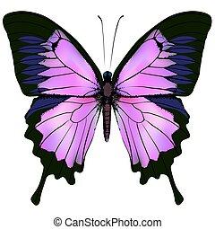 Mariposa. Ilustración de vectores de hermoso color rosa y púrpura