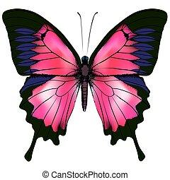 Mariposa. Ilustración de vectores de mariposa roja aislada en el fondo blanco.