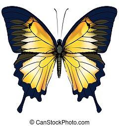 Mariposa. La mariposa amarilla aisló la ilustración de fondo blanco