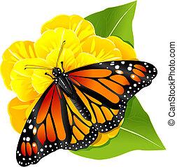 Mariposa Monarca en la flor