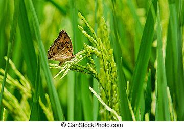 Mariposa se sienta en un pico, trigo