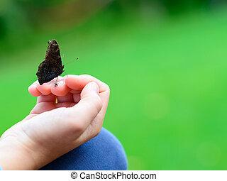 Mariposa sentada en la mano del niño