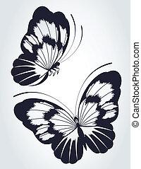 mariposa tropical