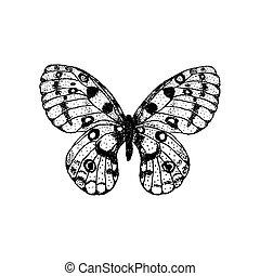 mariposa, vector, apolo, dibujo, mano, parnassius, ilustración