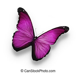 mariposa violeta oscura, aislada en blanco