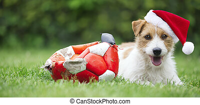 mascota, santa, perrito, navidad, feliz, perro