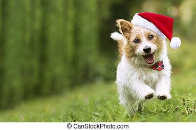 mascota, santa, perrito, navidad, sonreír feliz, corriente, perro, pasto o césped