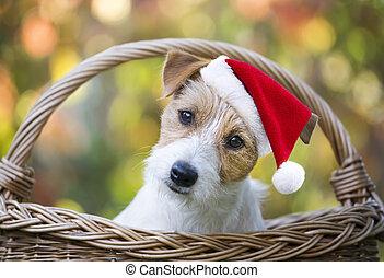 mascota, santa, perrito, navidad, sonreír feliz, perro