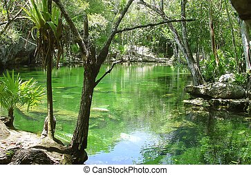 maya, roo, riviera, maya, selva, cenote, quintana