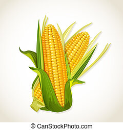 mazorca de maíz, maduro