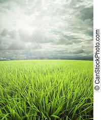 Meadow, cielo y sol