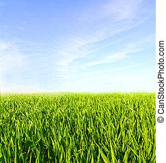 Meadow con hierba verde y cielo azul con nubes