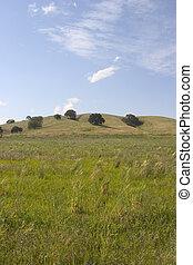 Meadow tierra 2