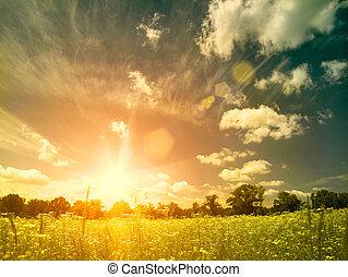 meadow., verano, belleza natural, encima, fondos, brillante, ocaso, salvaje, camomila, flores