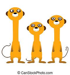 meerkats, curioso