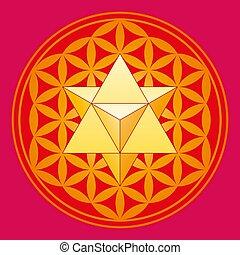 merkaba, flor, estrella, vida, tetraedro