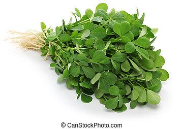 Methi, hojas fenugreek