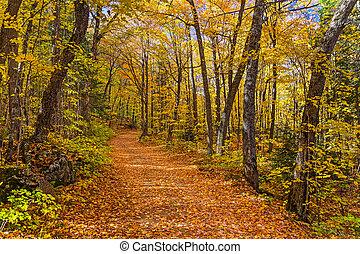 michigan, bosque, otoño