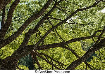 Mirando hacia arriba en el bosque, Green Tree rams naturaleza abstracta