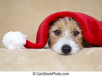 mirar, santa, perro, navidad feliz, mascota, perrito