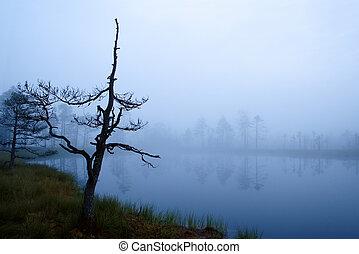 Misty Morning en Marsh