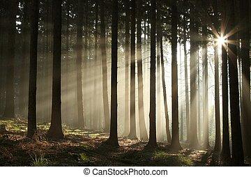 Misty otoñal bosque al amanecer