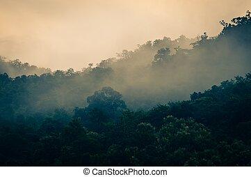 Misty temprano bosque de la mañana