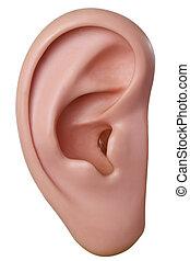 Modelo de oído humano