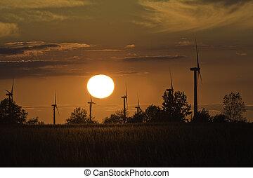 Molinos de viento en un campo de maíz al atardecer