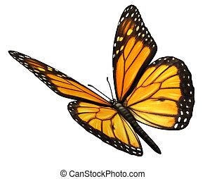Monarca mariposa en ángulo