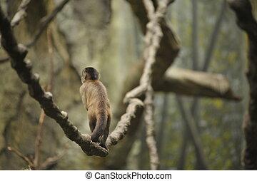 Mono en una vid en el bosque