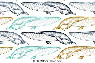 monocromo, bosquejo, seamless, ballenas, vector, patrón, style.