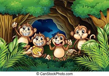 Monos felices en el bosque profundo