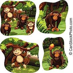 Monos viviendo en el bosque profundo