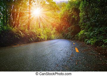 montaña, asfalto, sol, selva tropical, humedad, luz, camino, perspectiva