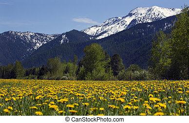 montaña, granja flor, nieve, amarillo, campo, montana