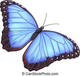 Morfo mariposa azul