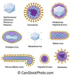 Morfología de virus comunes, eps8