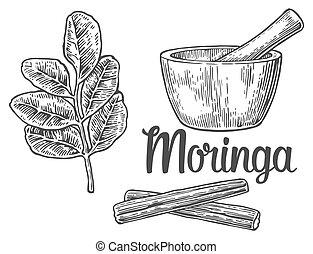 Moringa hojas y vainas. Mortero y peste. Ilustración grabada Vector.