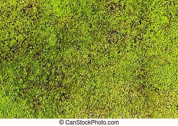 Moss de fondo