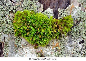 Moss en el primer plano de corteza de árbol