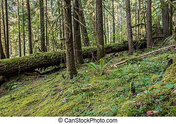 Moss toma el bosque de Oregon