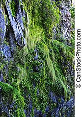 Moss y plantas en el precipicio