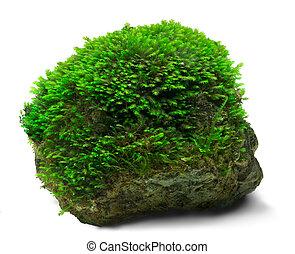Moss y rock
