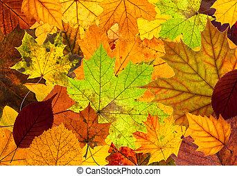 Muchas hojas coloridas de otoño