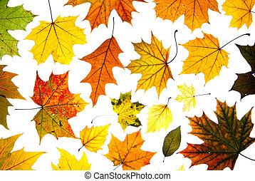 Muchas hojas de otoño