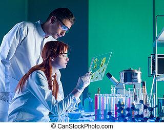 muestra, farmacéutico, científicos, estudiar