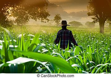 Mujer campesina caminando en campos de maíz por la mañana