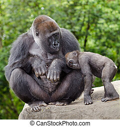 Mujer gorila cuidando a los jóvenes