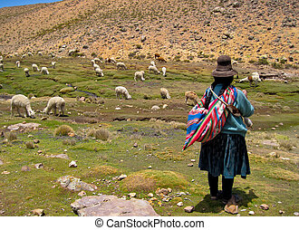 mujer, (near, arequipa), andes, lama, perú, multitud